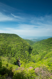 新緑の森と王滝の写真素材 [FYI04049591]