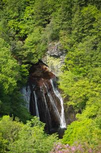 新緑の森と王滝の写真素材 [FYI04049592]