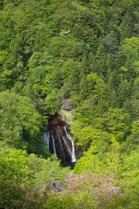 新緑の森と王滝の写真素材 [FYI04049593]