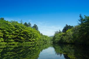 新緑の雲場池の写真素材 [FYI04049594]