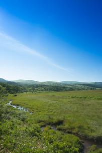 初夏の八島ヶ原湿原の写真素材 [FYI04049605]