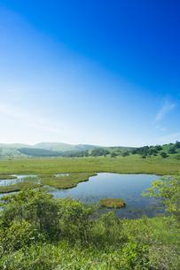 初夏の八島ヶ原湿原の写真素材 [FYI04049606]