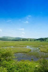 初夏の八島ヶ原湿原の写真素材 [FYI04049637]