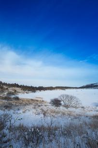 冬の八島ヶ原湿原の写真素材 [FYI04049691]