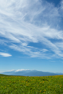 ニッコウキスゲの咲く霧ケ峰高原より南アルプスを望むの写真素材 [FYI04049757]