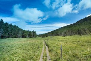 北八ヶ岳散策路の写真素材 [FYI04049766]