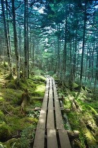 原生林に囲まれた散策路の写真素材 [FYI04049767]