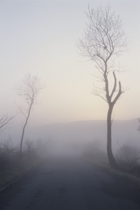 霧の木と道 芸北町 広島県の写真素材 [FYI04049915]