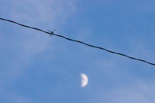 トンボと月の写真素材 [FYI04049925]