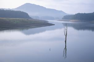 朝もやの湖と一本の樹の写真素材 [FYI04049933]