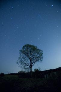 星空と一本の木の写真素材 [FYI04049946]
