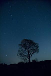 星空と一本の木の写真素材 [FYI04049949]