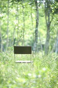森と椅子の写真素材 [FYI04049954]