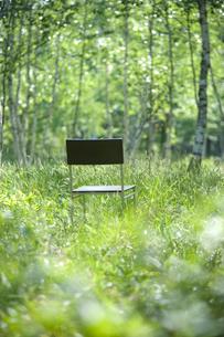 森と椅子の写真素材 [FYI04049956]