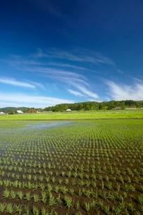水田と里山の写真素材 [FYI04049995]