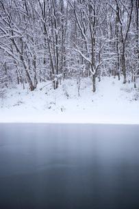 積雪の湖面と森の写真素材 [FYI04050006]