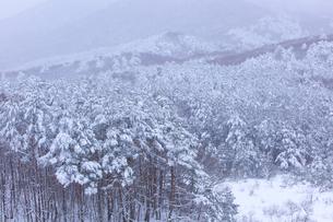冬の森の写真素材 [FYI04050007]
