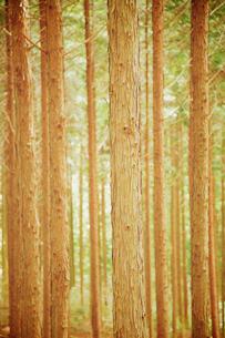 森の写真素材 [FYI04050009]