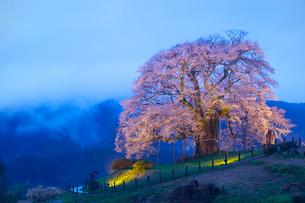 醍醐桜のライトアップの写真素材 [FYI04050011]