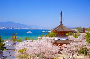 宮島 多宝塔と桜と大鳥居の写真素材 [FYI04050036]