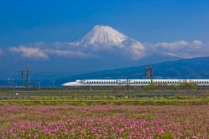 東海道・山陽新幹線N700系と富士山とレンゲソウの写真素材 [FYI04050143]