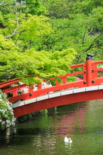 新緑の神泉苑 太鼓橋の写真素材 [FYI04050635]
