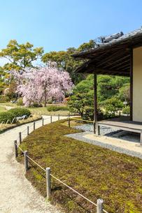 城南宮 桜咲く桃山の庭の写真素材 [FYI04050638]