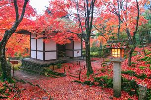秋の常寂光寺仁王門の写真素材 [FYI04050678]