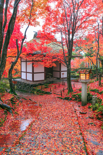 秋の常寂光寺仁王門の写真素材 [FYI04050680]