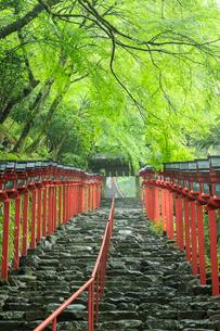 雨にぬれる貴船神社の写真素材 [FYI04050697]