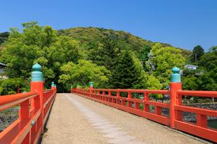 新緑と朝霧橋の写真素材 [FYI04050728]