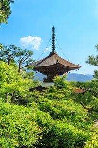 新緑の常寂光寺多宝塔の写真素材 [FYI04050738]