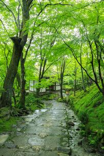 雨の常寂光寺の写真素材 [FYI04050748]