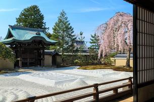 高台寺方丈から見るしだれ桜咲く波心庭と勅使門の写真素材 [FYI04050780]