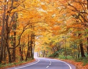 秋の森と道の写真素材 [FYI04050824]
