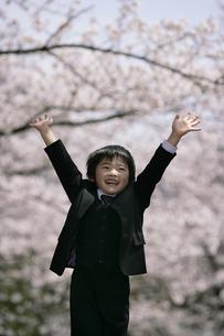 桜の木とスーツを着た男の子の写真素材 [FYI04050840]