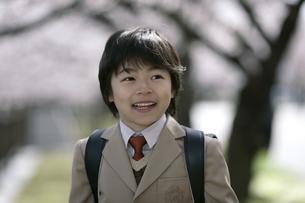 桜の木とスーツを着た男の子の写真素材 [FYI04050846]