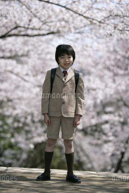 桜の木とスーツを着た男の子の写真素材 [FYI04050848]