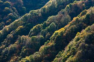 紅葉の山並みの写真素材 [FYI04051076]