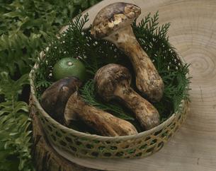 籠にもった松茸とかぼすの写真素材 [FYI04051122]