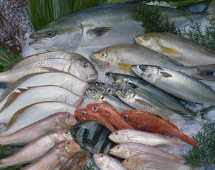 いろいろな魚の集合の写真素材 [FYI04051133]