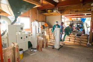 籾摺り機による玄米の袋詰めの写真素材 [FYI04051210]