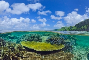 宮古諸島伊良部島の海中風景の写真素材 [FYI04051418]