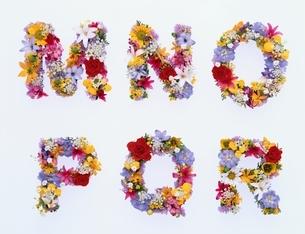 カラフルな花で作ったアルファベットの文字(M~R)の写真素材 [FYI04051729]