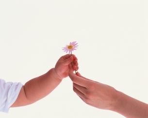 花を子供に渡す母の手の写真素材 [FYI04051738]