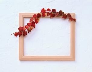 ツタと木のフレーム(紅葉)の写真素材 [FYI04051757]