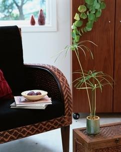 窓と籐イスと観葉植物の写真素材 [FYI04051766]