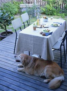 ガーデンパーティのテーブルと犬の写真素材 [FYI04051775]
