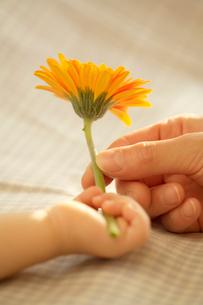 花を持つ母親と赤ちゃんの手の写真素材 [FYI04051881]