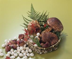 かごに入った松茸と栗と銀杏の写真素材 [FYI04051905]